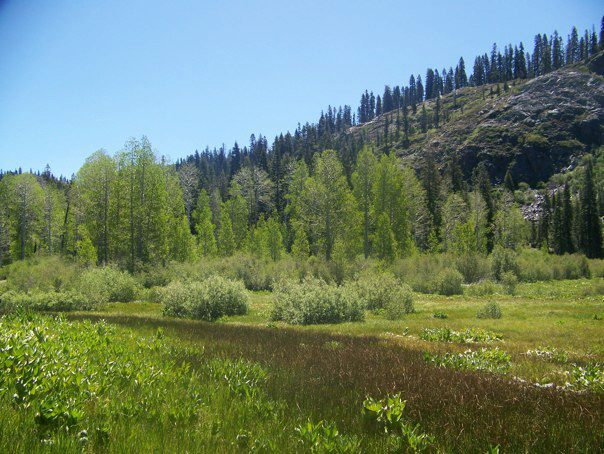 Loney Meadow with aspen trees on the fringe