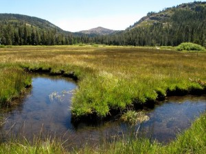 Loney Meadows (photo by Hank Meals)