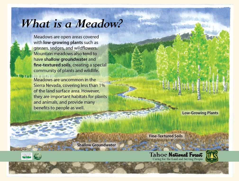 Panel 2 What is a Meadow 31715